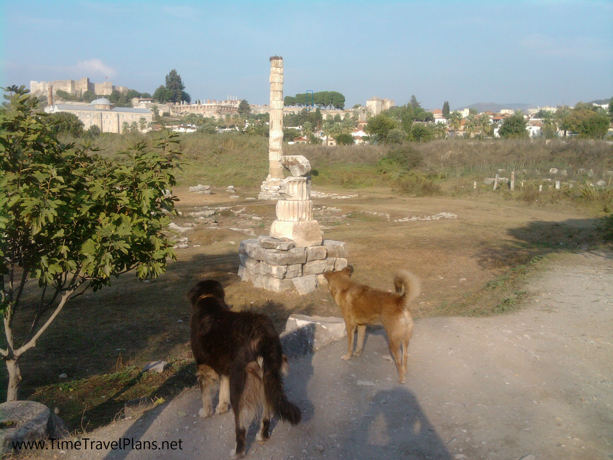 These dogs are staring at what remains of the Temple of Artemis in Ephesus, Turkey. It's as if they know that something great once stood here. This temple was one of the Seven Wonders of the Ancient World. Now look at it...