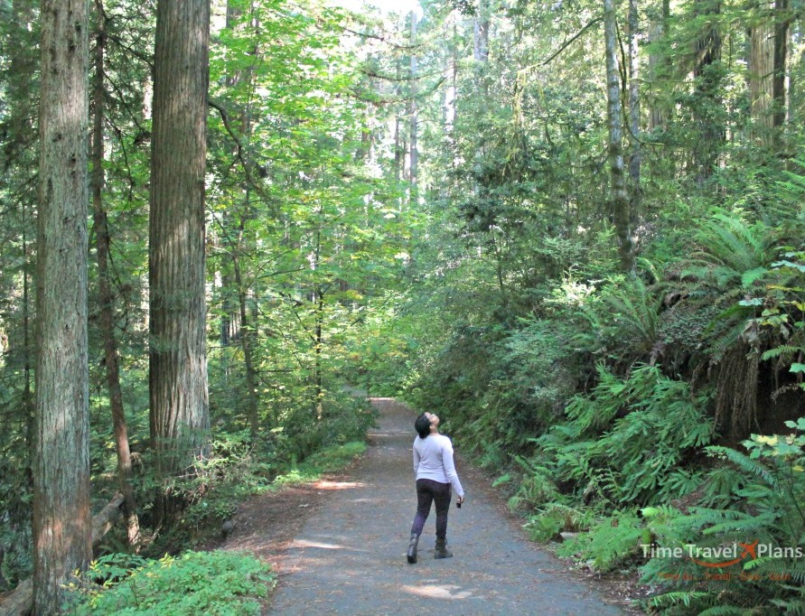 3 Ways to Experience the Coastal Redwoods