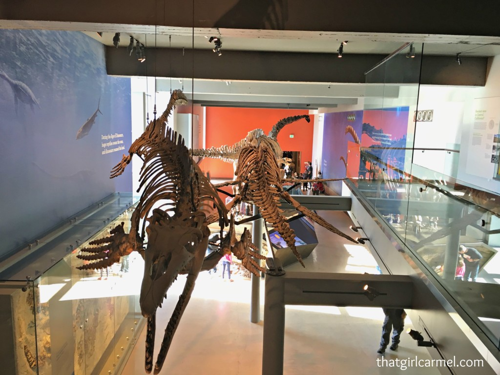 More from the Dinosaur Hall...pre-historic sea creatures