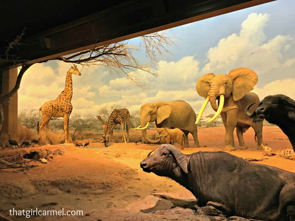 natural-history-museum-los-angeles