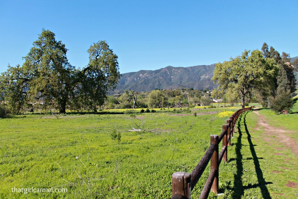 ojai-valley-ojai-meadows-preserve