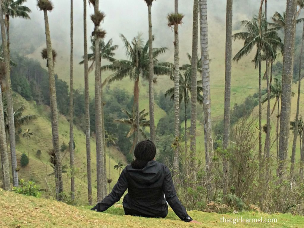 What to Know before You Hike to Colombia's Wax Palms