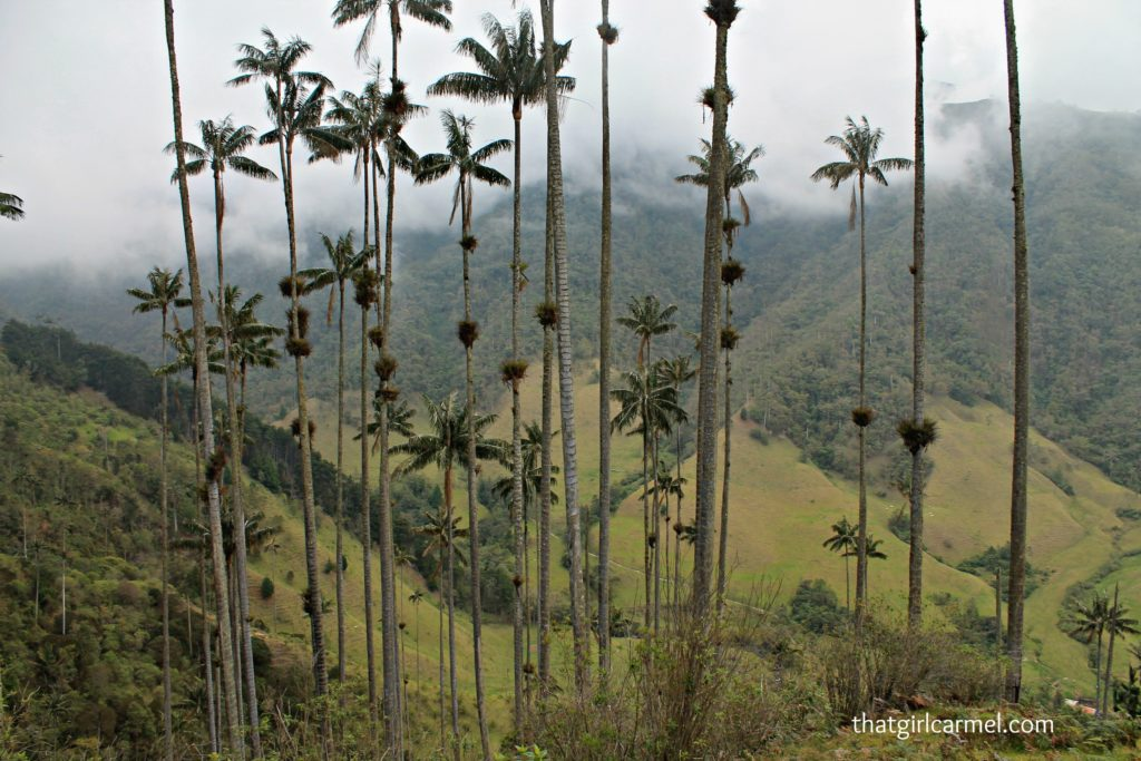 colombia-national-tree-cocora-valley